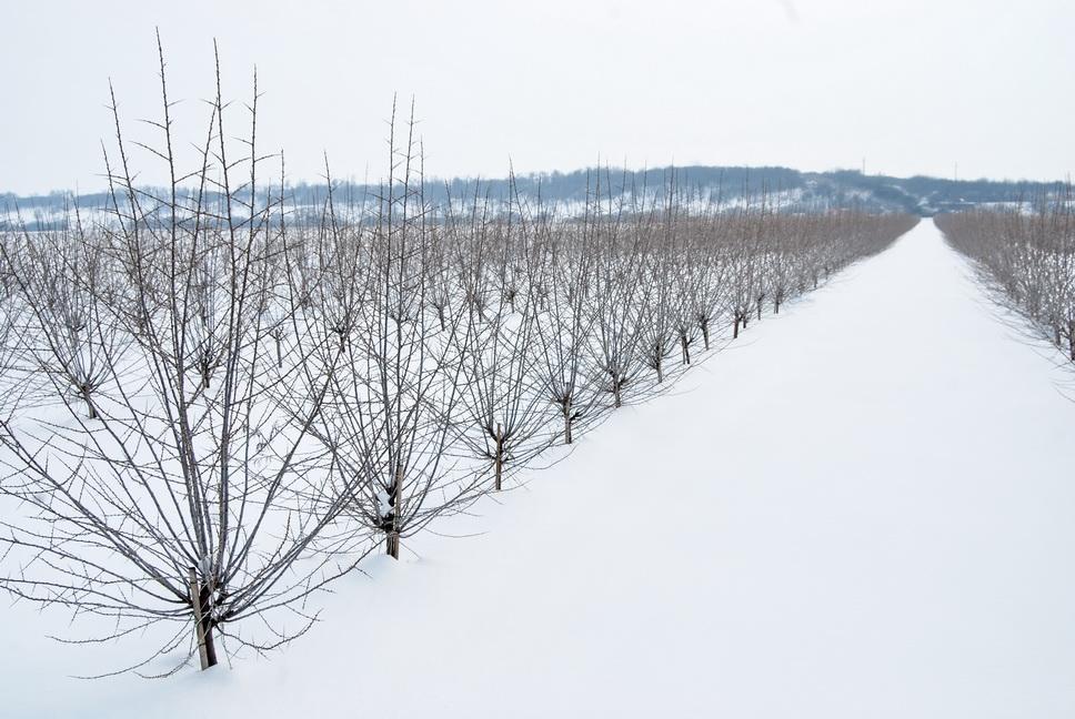 12 iarna II