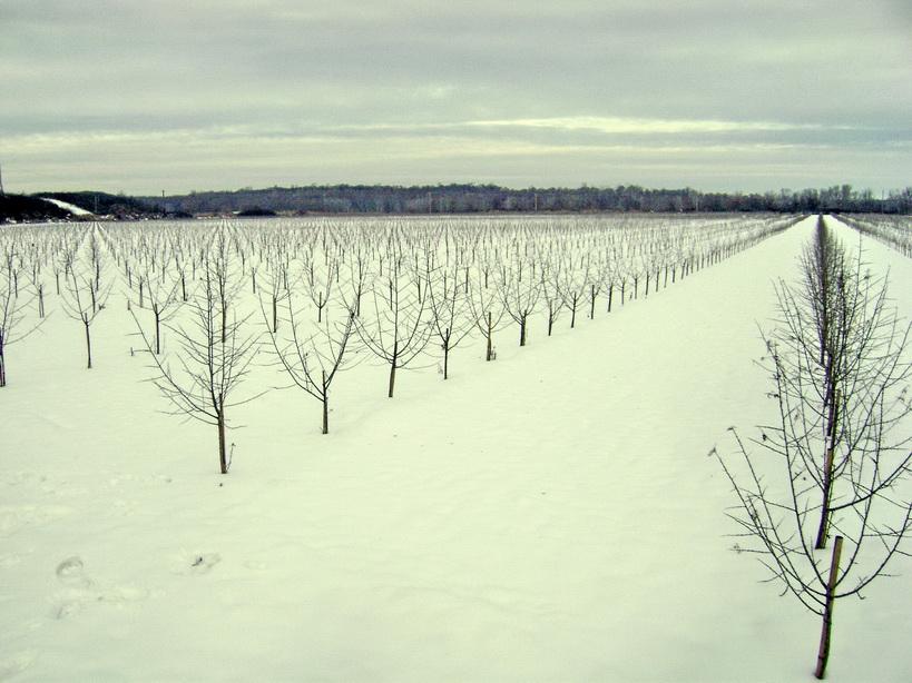 5 iarna an I