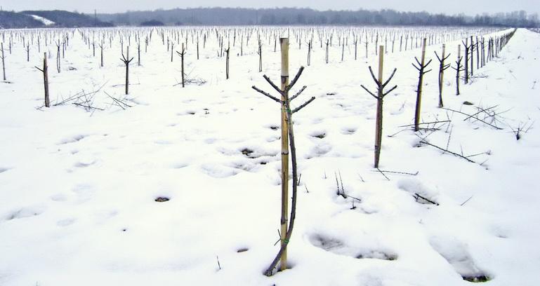 5 taiere iarna I